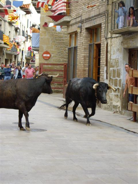 ENCIERRO DE VAQUILLAS . FIESTAS DE SADABA. CALLE MAYOR , creada por pili el 25/04/2009