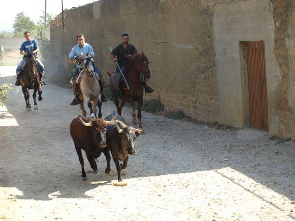 Foto de concurso de fotografia de jose carlos guillen , creada por Raúl el 22/09/2009